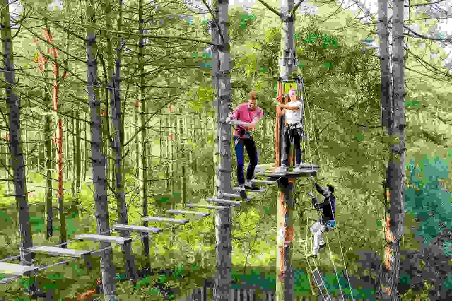 High ropes at Go Ape